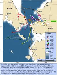 Kotzebue Alaska Map by Maps Kotzebue Sound 2009 Comparative Ringed And Bearded Seal