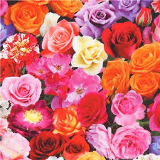 Colorful Roses Beautiful Colorful Rose Flowers Digital Print Fabric By