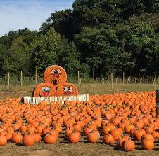 Pumpkin Picking Places In South Jersey by The 27 Best Farms For Apple U0026 Pumpkin Picking Near Nyc New York