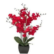 Artificial Orchids Elle Decor Artificial Orchid Plant Polyvore