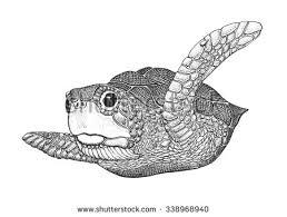 free vintage turtle vector illustration download free vector art