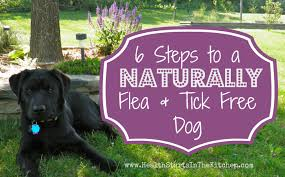 Diy Dog And Cat Treats by 6 Steps To A Naturally Flea U0026 Tick Free Dog Health Starts In The