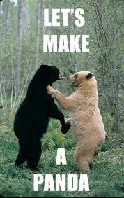 Polar Bear Meme - animals bears meme lol humor internethumor polar bear black
