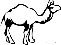 camel coloring printable for kids