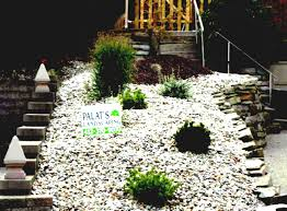 succulent rock garden ideas d home design houzz landscaping cactus