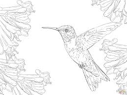 seagull coloring page seagulls coloring pages free coloring pages