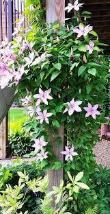 14 best front porch ideas huge flowers growing on obelisks and