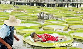 Lotus Garden Cottages by Online Get Cheap Cottage Garden Seeds Aliexpress Com Alibaba Group