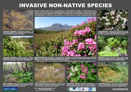 invasive non native plants skye and lochalsh environment forum free posters download save