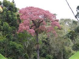 native plants in brazil scott mori author at science talk