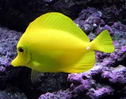 coral reef fish wikipedia