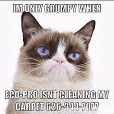 Carpet Cleaning Meme - eco pro cleaning services and carpet care 74 photos 44 reviews