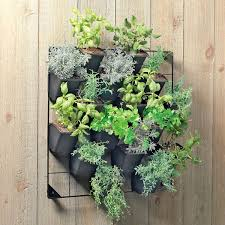 Wall Planters Indoor by Indoor Hanging Plants Using Black Wrought Iron Board And Black