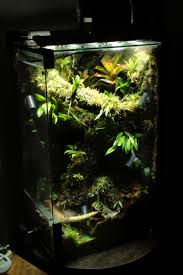 29 gallon vertical neotropical vivarium home to ranitomeya