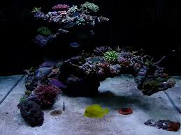 Aquascape Online Bonsai Tree Inspired Aquascape Reef Central Online Community