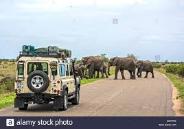 hatari jeep kruger national park tourists stock photos u0026 kruger national park