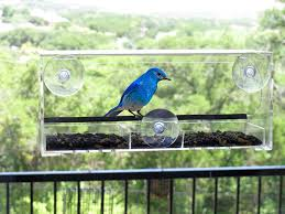 amazon com flock to me clear bird feeder with lifetime