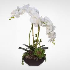 silk orchids real touch white phalaenopsis silk orchids with succulents in a