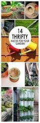Garden Craft Terra Cotta Marker - 293 best gardening ideas u0026 inspiration images on pinterest
