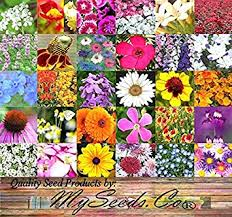 wildflower seed packets perennial wildflower seeds bulk mix minimum 30