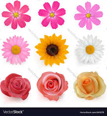 summer flowers royalty free vector image vectorstock