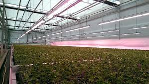 commercial led grow lights greenhouse grow lights greenhouse republic led grow lights