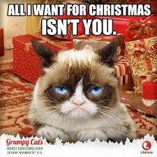 530 best grumpy cat images on pinterest grumpy kitty kitty cats