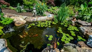 gold fish and koi pond design and construction u2022 h2oasis