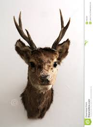 mounted deer head royalty free stock photography image 2682587