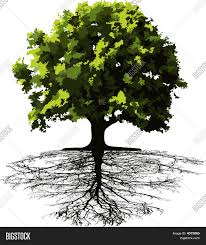 trees roots vector photo bigstock