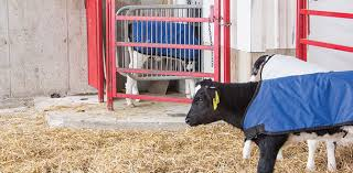 Calf Raising Barns Check Out My New Calf Barn And Automated Feeding Progressive