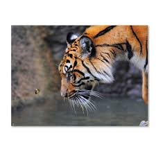 jai johnson risk taker bengal tiger and butterfly canvas