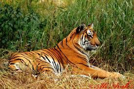 amazing animals september 2011