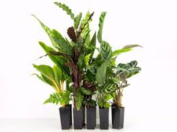 indoor plant indoor plants buy house plants online gift ideas plants in a box