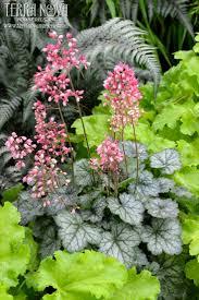 perennial garden vegetables 106 best perennials images on pinterest flower gardening