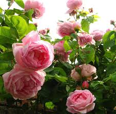 take me away 17 the most beautiful rose gardens around the