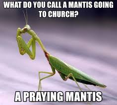 Mantis Meme - what do you call a mantis going to church a praying mantis mantis