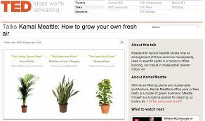 three essential houseplants for clean indoor air kamal meattle
