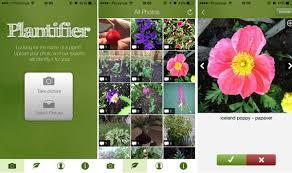 best plant identification apps balcony garden web