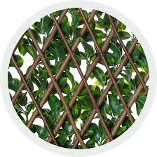 expandable ficus leaf lattice natrahedge