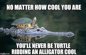 Turtle Memes - image tagged in jbmemegeek turtle ridding alligator turtle meme