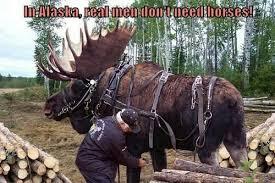 Moose Meme - moose mounties now you re fucked meme by seizuregoat memedroid