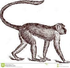 monkey royalty free stock photos image 29712548