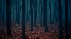 halloween dark forest background 600x600 dark mysterious forest pictures to pin on pinterest pinsdaddy