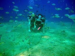 Rhode Island snorkeling images Diving rhodes island guide to diving rhodes island with marine JPG