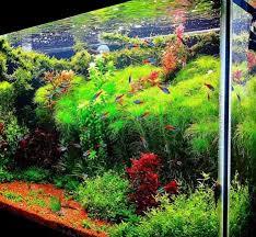Aquascape Com Aquascape Aquarium Design Android Apps On Google Play