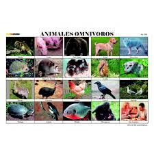 imagenes de animales carnivoros para imprimir imagenes animales omnivoros para imprimir imagui monse