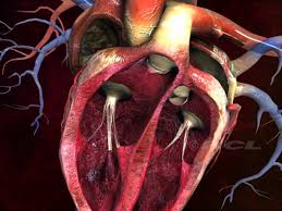 The Human Anatomy Pictures Hcl Learning Digischool Structure Of The Human Heart Youtube