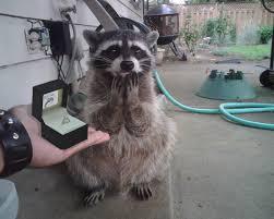 Funny Raccoon Meme - the funniest posts from reddit meme board pinterest funny