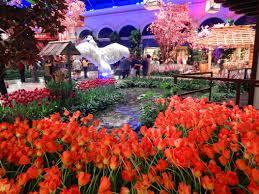 Botanical Gardens Bellagio by Bellagio Conservatory And Botanical Gardens Display Spring 2016